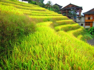 Rice Terraces in Guanxi, China