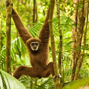I did some searching online and discovered that the little dude who wrapped his arms around me is a Lars Gibbon.  I'd much rather have seen him in the wild, but I was glad to know he was cared for in his captive life.