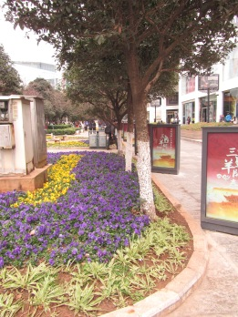One of the many flower displays in Kunming.  All of down town looks like this