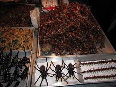 They also had centipede, tarantula and cockroaches, but I didn`t care to try any of them haha!