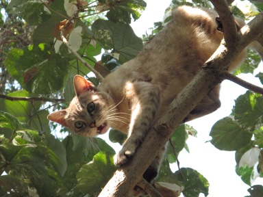 A cat stuck up in a tree.  I got the picture at the exact right moment lol!