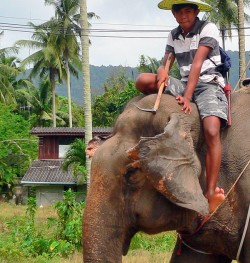 Add in the fact that the Elephant knows that it'll be stabbed in the head with that hook if it misbehaves, and then you get better image of what elephant trekking is like for the elephant