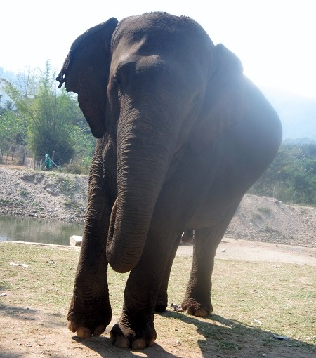 Elephant Nature Park – Eco Tourism at its Best!