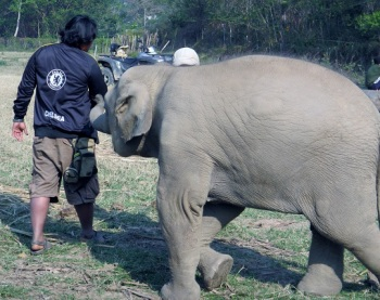 Here she is again, trying to get her Mahout to play with her! haha!!