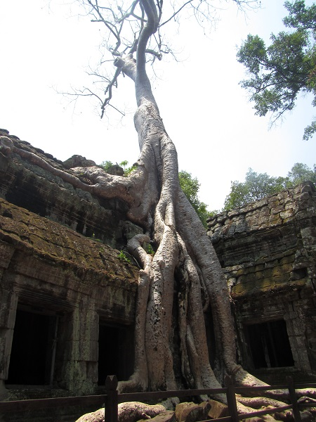 The way the trees have grown over and through the temple is why Ta Prohm is so famous today