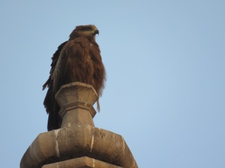 The sae bird on top of the building