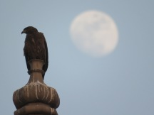 A very cool shot I got with our new camera. This bird was high up on one of the towers