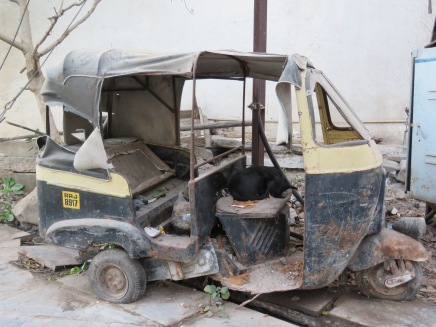 A homeless dog napping in an old Tuk Tuk