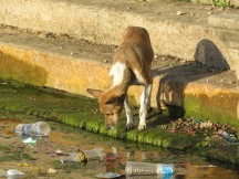 A dog rummaging through garbage in the lake, looking for something to eat