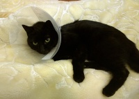Poe, unimpressed that she has been 'coned'
