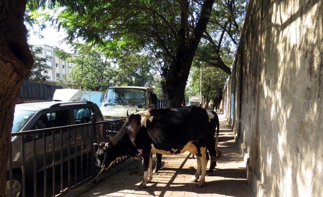 A cow in the middle of a sidewalk in Mumbai...