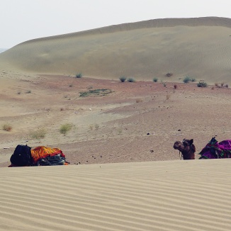 Our camels taking a rest