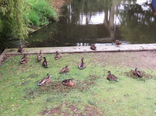 These ducks shall not be roasted in Peking!!!