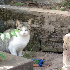 This cat was also at this temple, but it was terrified of me and ran away ASAP