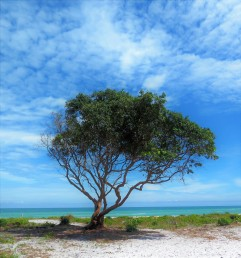 A lone tree on a beach in Phu Quoc, Vietnam