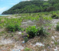 Locals and tourists alike leave garbage all over the island