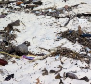 Garbage also comes in from the ocean, and nobody seems to clean it up
