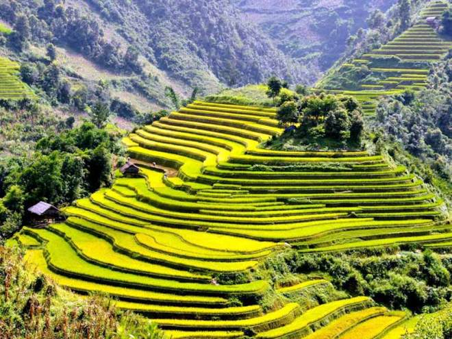 sapa-rice-terraces