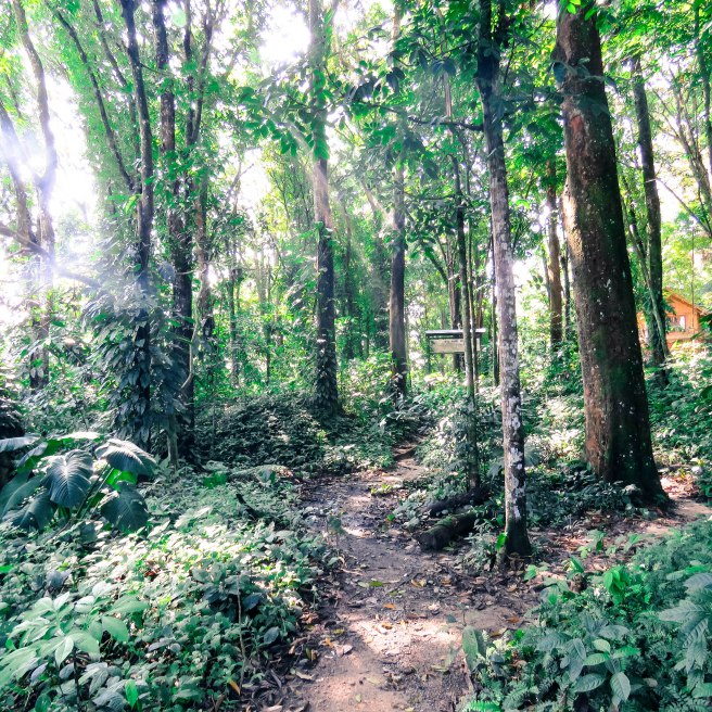 The beautiful trail became familiar. We walked it many times.