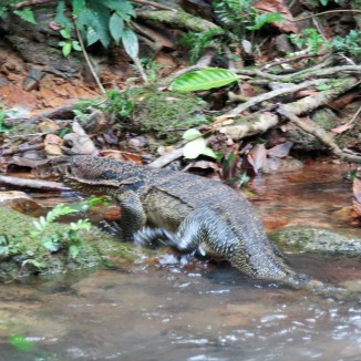 Some meter long monitor lizards were hanging out nearby. I didn't get any pictures because I was busy recovering, but Dave managed to get a shot or two