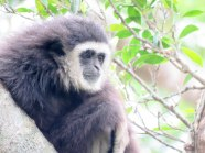 Primates don't belong in zoos....no matter how good of a zoo it is!