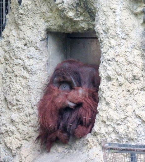The orangutan made me want to cry....