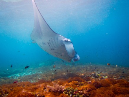Dave was never lucky enough to see them while diving, but he did see them while snorkeling.