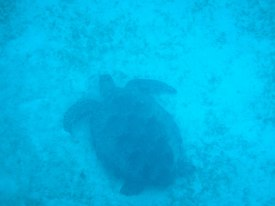 One of several turtles we spotted