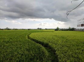 The last picture I took in Indonesia. A storm coming in over a rice field